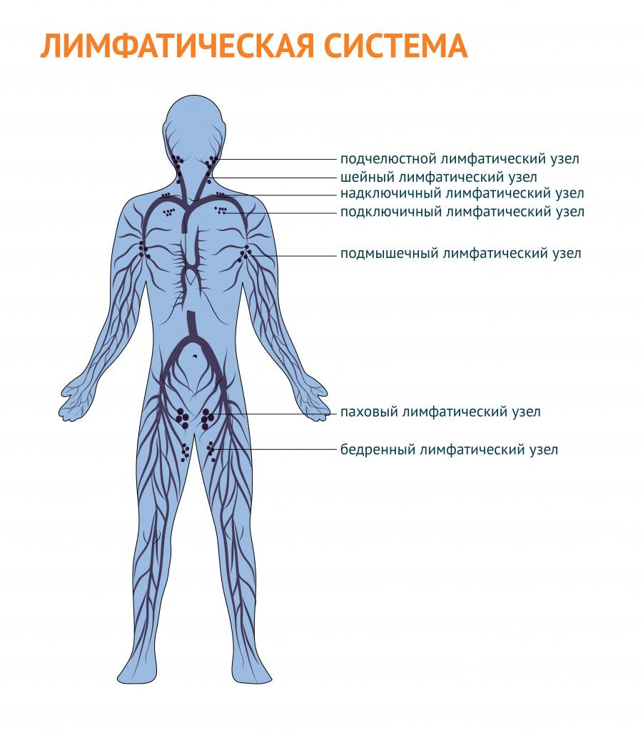 Какой анализ крови нужно сдать при увеличении лимфоузлов thumbnail