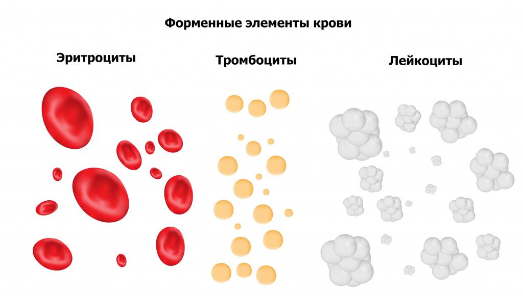 Форменные элементы крови.jpg